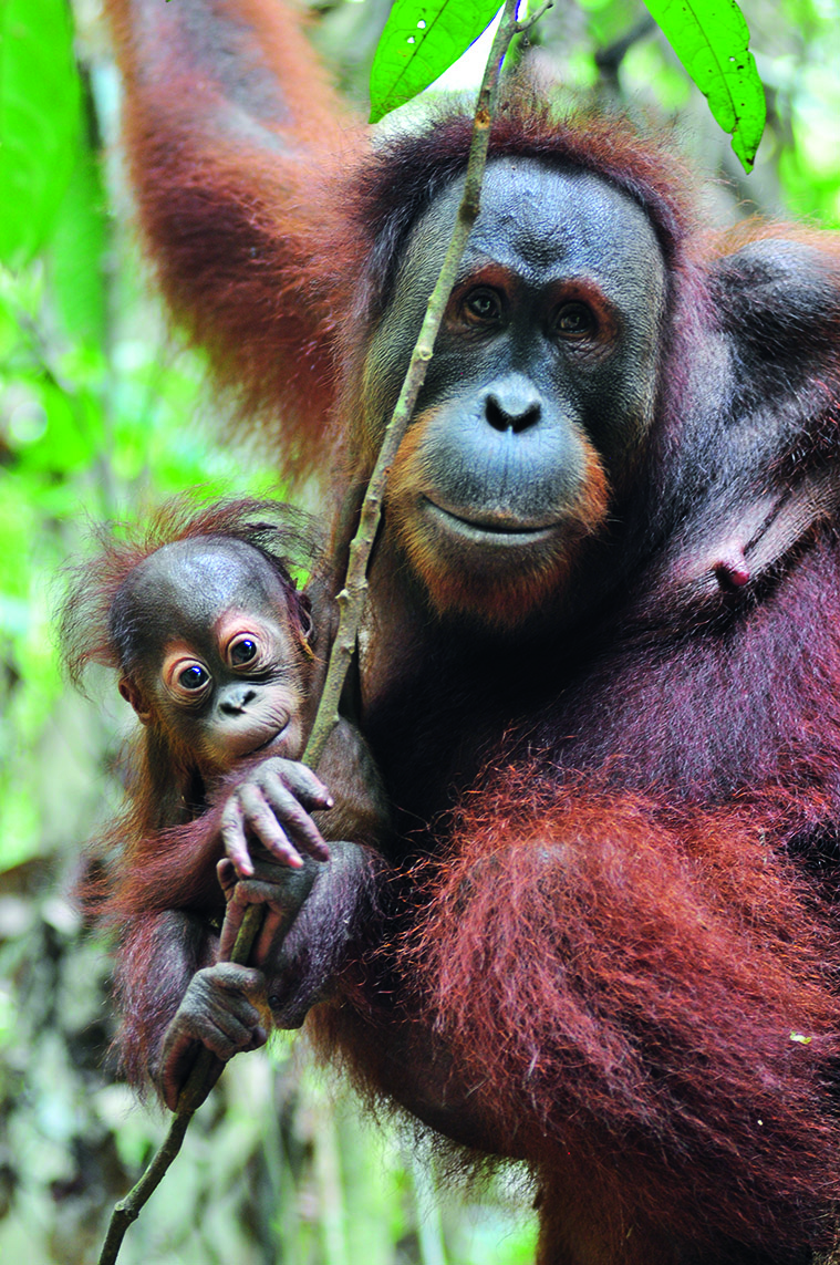 Rimbani-with-wild-born-baby-Raja-in-Bukit-Tigapuluh_HR-1593065675618.jpg